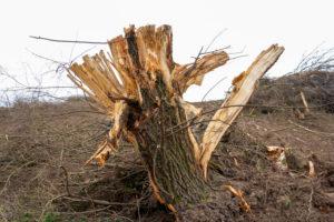 Deutschland, Rodungsgebiet mit Baumstumpf.