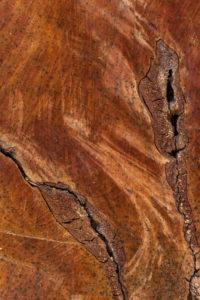 Deutschland, Baumscheibe mit markanter Holzstruktur.