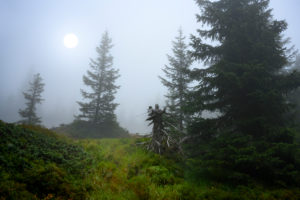 Österreich, Montafon, Partenen, Nebelstimmung im Bergwald beim Wiegensee.