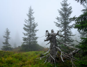 Austria, Montafon, Partenen, foggy mood in the mountain forest at Wiegensee.