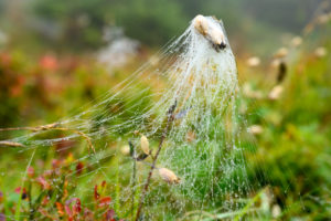 Austria, Montafon, spider web with dew drops