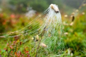 Österreich, Montafon, Spinnennetz mit Tautropfen