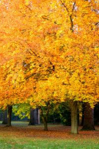 Deutschland, Baden-Württemberg, Karlsruhe, Baum im Schlossgarten.