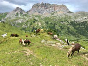 Natur, Berge, Pferde, Hochplateaus, Wiese, Spätsommer, Ruhe, Frieden, Entspannung, Wandern, Auszeit, Genuss, Durchatmen, Wege,
