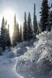 Kanada, Kanadische Rocky Mountains, British Columbia, Golden Kicking Horse Mountain Resort, Skigebiet, Bäume, verschneit, Sonne, Gegenlicht,