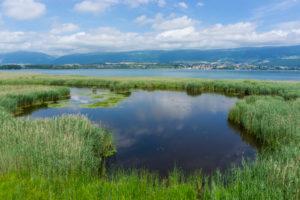Sumpflandschaft im Pro Natura Zentrum Champ-Pittet, Naturschutzgebiet Grande Cariçaie, Cheseaux-Noréaz Südostufer, Lac de Neuchâtel, Kanton Neuenburg, Westschweiz, Schweiz