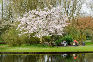 Spring in the Beatrixpark, Amsterdam Zuid, Amsterdam the south, Amsterdam, Holland, Netherlands