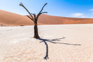 Dead tree in front of dune in Deadvlei (white salt-clay pan), Sossusvlei, Sesriem, Namibia