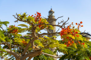 Maspalomas lighthouse behind tree with red flowers, Gran Canaria, Spain