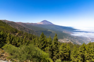 Corona Forestal - coniferous forest on the way in Teide National Park with a view of volcano, Tenerife, Spain