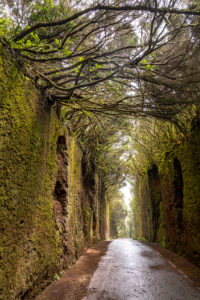 'Camino viejo al Pico del Inglés' - tree-covered passage in the Anaga Mountains, Tenerife, Spain