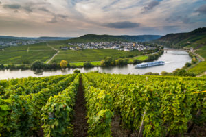 Cruiseship shipping through the Vineyards around the Moselle at Trittenheim, Moselle valley, Rhineland-Palatinate, Germany