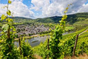 Vineyards on the Moselle, Pünderich, Rhineland-Palatinate, Germany