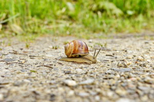 snail crawling on gravel road