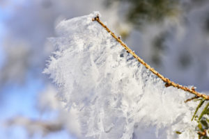 Rime crystals on branch