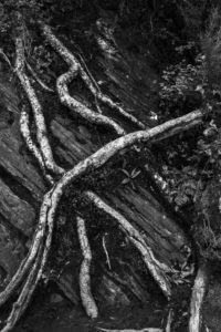 Wurzel in schwarz-weiß