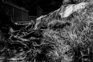 Landschaftsaufnahme im Wald, schwarz-weiß