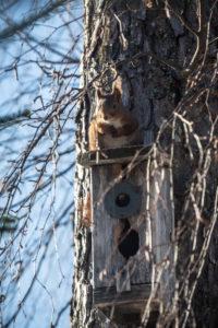 Eichhörnchen sitzt auf Vogelhaus