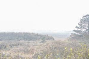 Gegenlichtaufnahme, Düne in Sankt Peter-Ording, Schleswig-Holstein, Deutschland