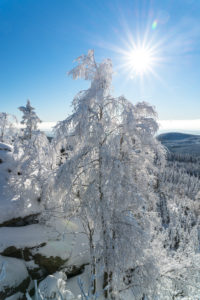 View from Ahrensklint (822 m) into the snowy Harz mountains, Saxony-Anhalt, Germany