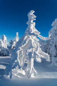 Mit Schnee und eis überzogener Wald im Nationalpark Harz, Sachsen-Anhalt, Deutschland