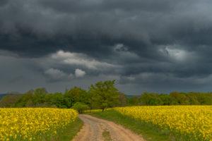 Gewitterwolken über einem Rapsfeld mit Feldweg