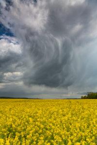 Gewitterwolken über einem Rapsfeld