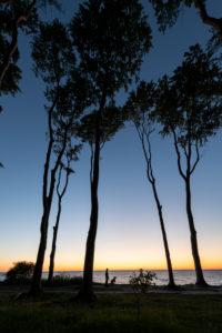 Sonnenuntergang im Gespensterwald bei Nienhagen an der Ostsee.