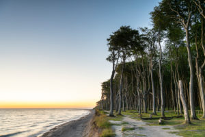 Sunset in the ghost forest near Nienhagen on the Baltic Sea.
