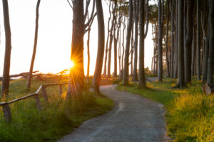 Sunrise in the ghost forest Nienhagen near Rostock in Mecklenburg-Western Pomerania.