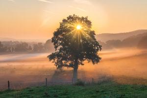 Sonnenaufgang mit Bodennebel in Thüringen, Deutschland.