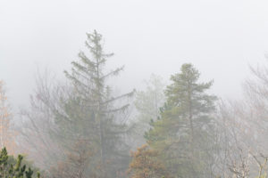 Nebelstimmung im Wald kurz nach Sonnenaufgang.