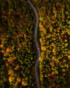 Road in the forest in Bosnia and Herzegovina