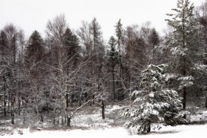 Trees, Forest, Springtime, Snow, Mountains, Highlands, Silence, Turntalstrasse, Schonach, Black Forest, Germany, Europe,