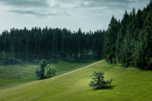 Forest, Hill, Mountains, Meadow, Highlands, Europe, Germany, Black Forest, Schonach, Rohrhardsberg, Yachbach,