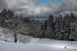Winter Landscape of Mountains and Spruce Forest covered with Snow, Europe, Germany, Black Forest, Schonach, Rensberg, Vorderlauben,