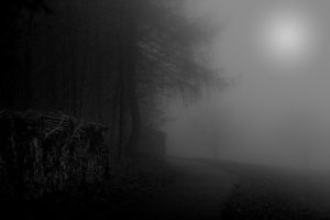 Mysterious, Trees, Fog, Mood, Rural Scene. Europe, Germany, Black Forest, Schonach.