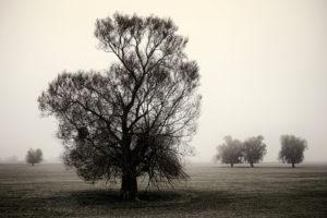 Trees in Lower Oder Valley International Park in dense autumn fog,