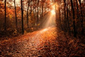 Sonnenstrahlen brechen durch den Herbstwald und lassen einen Weg erstrahlen