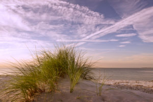 Baltic dune in the evening light