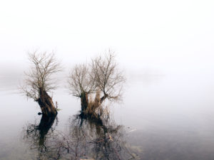 Lakeside in the autumnal fog