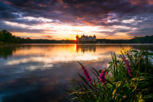 Schloss Moritzburg, See, Spiegelung, Sonnenuntergang, Blumen