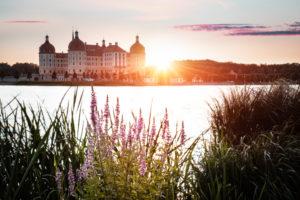 Schloss Moritzburg, See, Spiegelung, Blumen, Gegenlicht, Sonnenaufgang