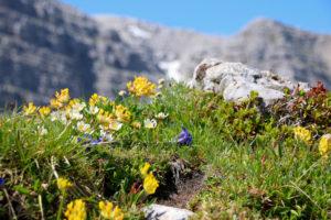 Warscheneck im toten Gebirge