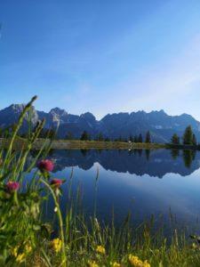 Wilder Kaiser spiegelt sich frühmorgens im astbergsee oberhalb von Reith bei kitzbühel .