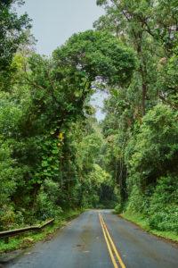 Road through the rainforest to the Nu'uanu Pali Lookout, Nu'uanu Pali, Honolulu, Oahu Island, Oahu, Hawaii, Aloha State, USA