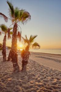 Landscape, beach, palm trees, Coma-Ruga, Tarragona Province, Catalonia, Northern Spain, Spain, Europe