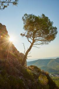 Landscape, El Montmell, Tarragona Province, Catalonia, Spain, Europe