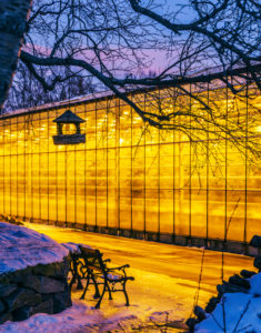 Geothermally heated greenhouse in the wintertime, Iceland