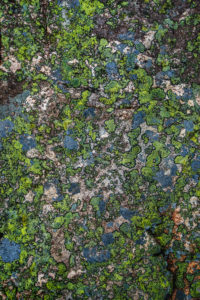 Moss, Hogland Island, Finland